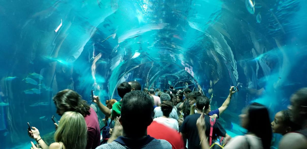Aqua Rio Olympic Boulevard Tour