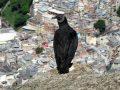 Hiking Rio – Dois Irmaos and Vidigal Favela
